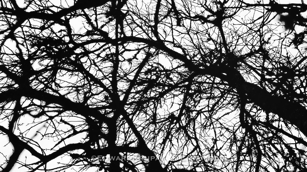 Silhouetted tree branches in the evening sky.