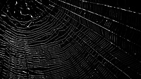 Spider Web. Image taken with a Nikon 1 V2 camera, FT1 adapter, and 70-300 mm VR lens (ISO 160, 185 mm, f/5, 1/80 sec).