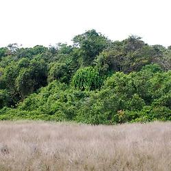 """Brejo-herbáceo (Ambiente) fotografado em Guarapari, Espírito Santo -  Sudeste do Brasil. Bioma Mata Atlântica. Registro feito em 2007.<br /> <br /> ENGLISH: Herbaceous-marsh photographed in Guarapari, Espírito Santo - Southeast of Brazil. Atlantic Forest Biome. Picture made in 2007."""
