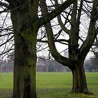 Europe, UK, England, Hertfordshire, Bushey. Bare trees and grass.