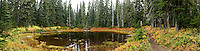 autumn huckleberry colors the shoreline along a pond in a Subalpine Fir forest in the Indian Heaven Wilderness - Gifford Pinchot National Forest, Washington state, USA panorama