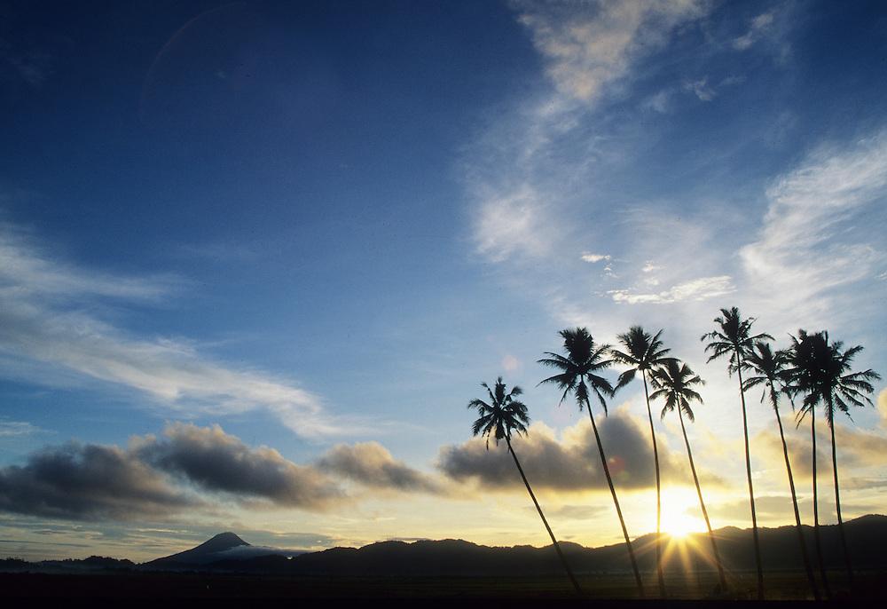 Asia, Indonesia, Sulawesi, Manado, sunset starburst behind coconut palm trees at Lake Tondano