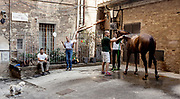 Italy, Siena, the Palio: after the morning trial la Povraccia, horses go back to the stable which is in the heart of the contrada; here it gets the last attention for the race