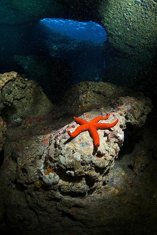 10/Enero/2015 Islas Baleares. Ibiza.<br /> Estrella de mar en la inmersión de Agujeros Azules con Subfari Portinatx.<br /> <br /> ©JOAN COSTA