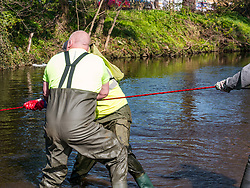 Pictured: Water of Leith Spring clean, Edinburgh, Scotland. 31 March 2019, A group of volunteers does an annual Spring clean along a section of the banks of the Water of Leith which runs through Edinburgh, organised by the Water of Leith Conservation Trust. This involves wading across the river to retrieve rubbish. <br /> Sally Anderson | EdinburghElitemedia.co.uk<br /> Reproduction fee payable to Edinburgh Elite Media
