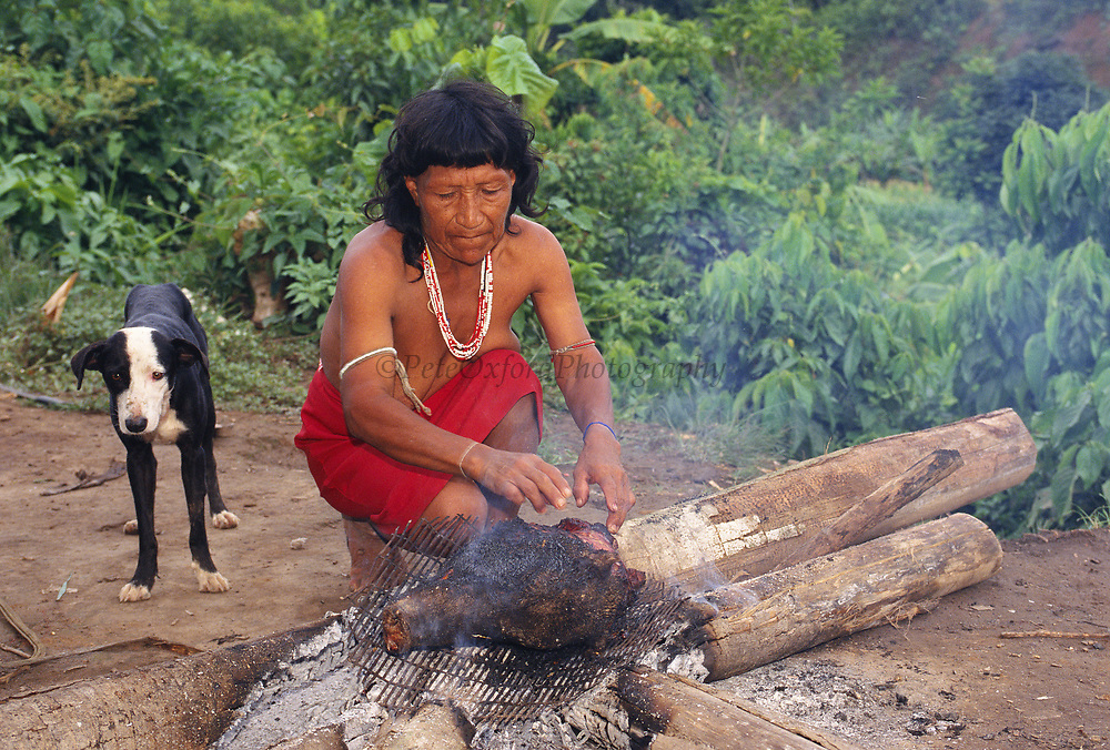 Yaminahua Indian Cooking Peccary Head<br />Boca Mishagua River<br />Amazon Rain Forest, PERU.  South America<br />'Only contacted in 1988'