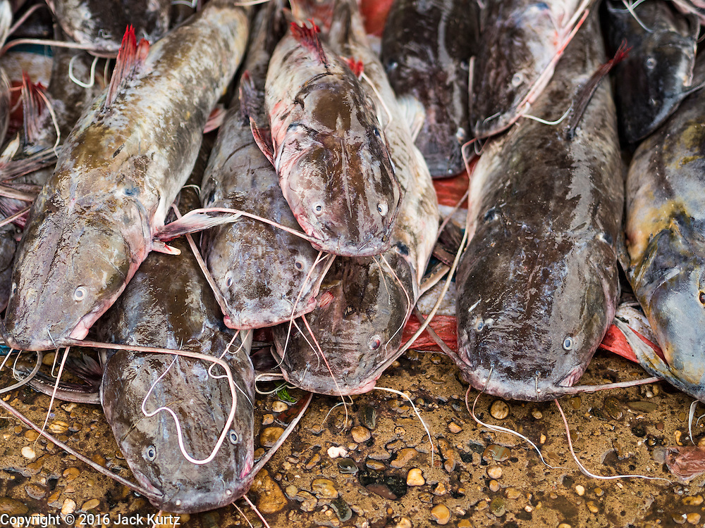 16 JUNE 2016 - PAKSE, CHAMPASAK, LAOS: Catfish caught in the Mekong River for sale in the market in Pakse. The Mekong is home to several species of large catfish, some of which weigh more than 600 pounds. The giant catfish are becoming very rare and seldom caught anymore.       PHOTO BY JACK KURTZ