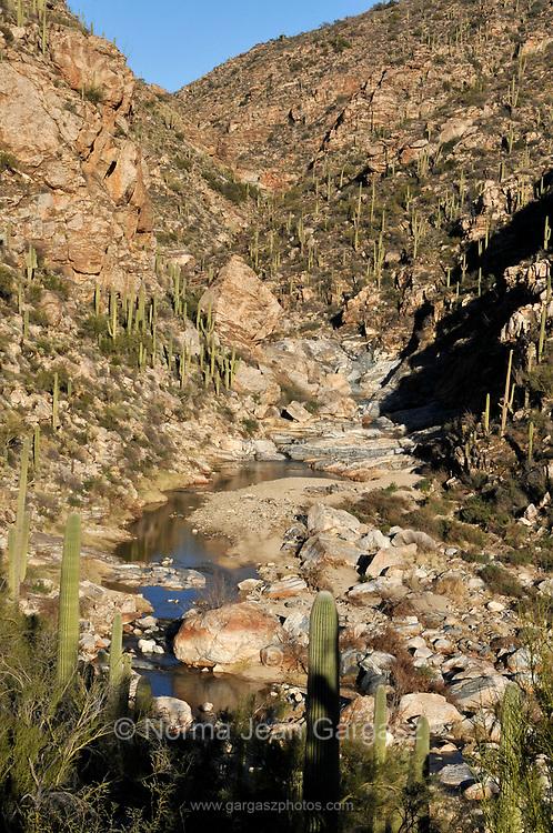 Saguaro cactus line the lower falls of Tanque Verde Falls at Tanque Verde Creek in Redington Pass, Rincon Mountains, Sonoran Desert, Tucson, Arizona, USA.