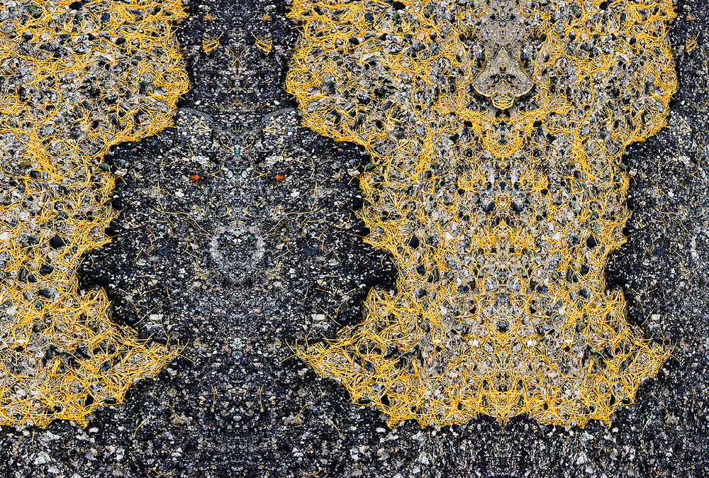 """""""Return of the Gray Wolf"""", derivative image created from a photo of larch needles on broken asphalt, North Cascades Highway, October, WA, USA"""