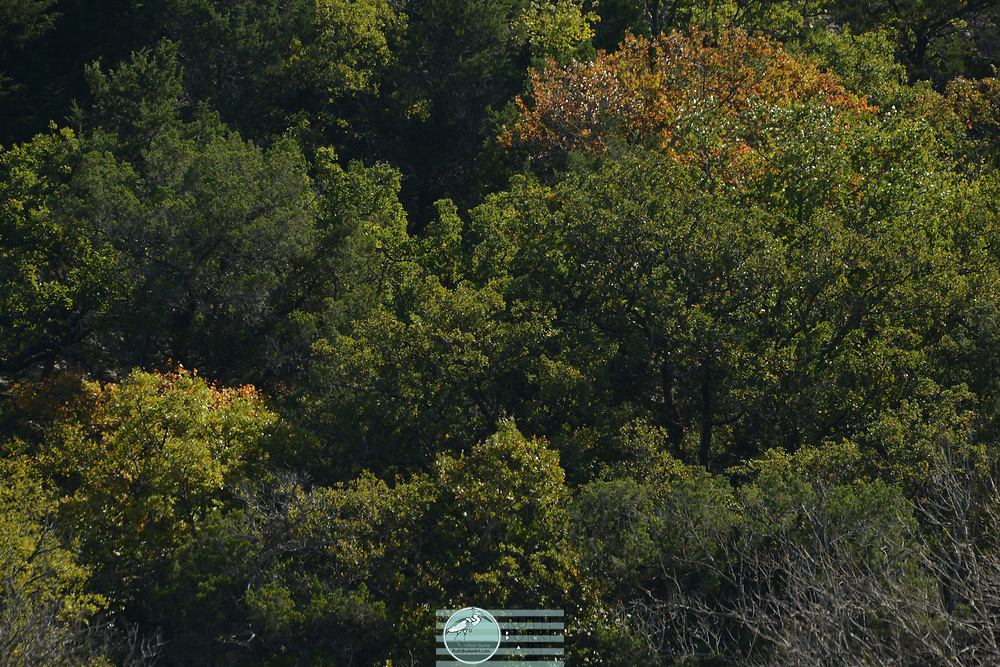 Trees and grasses with water in fall season in Texas Hill Country