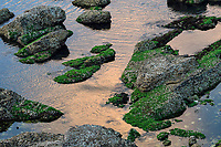 """Porphyra is a coldwater seaweed that grows in cold, shallow seawater. Yangma Island, prefecture Yantai, Shandong, China. Yangma Island is situated by the Yellow Sea and it is called """"the pearl in the sea""""."""