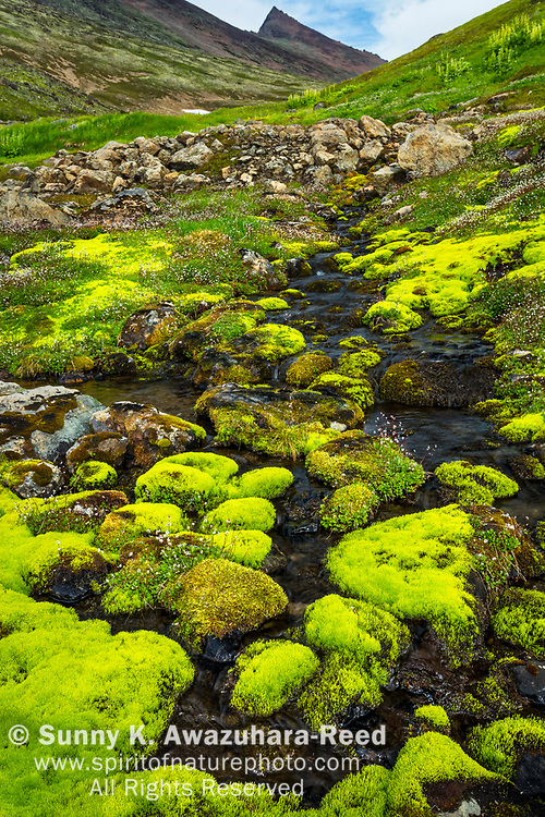 Hidden Creek flows among moss covered rocks in Hidden Valley. The Ramp peak is in the background. Chugach State Park, Southcentral Alaska, Summer. Vertical image.
