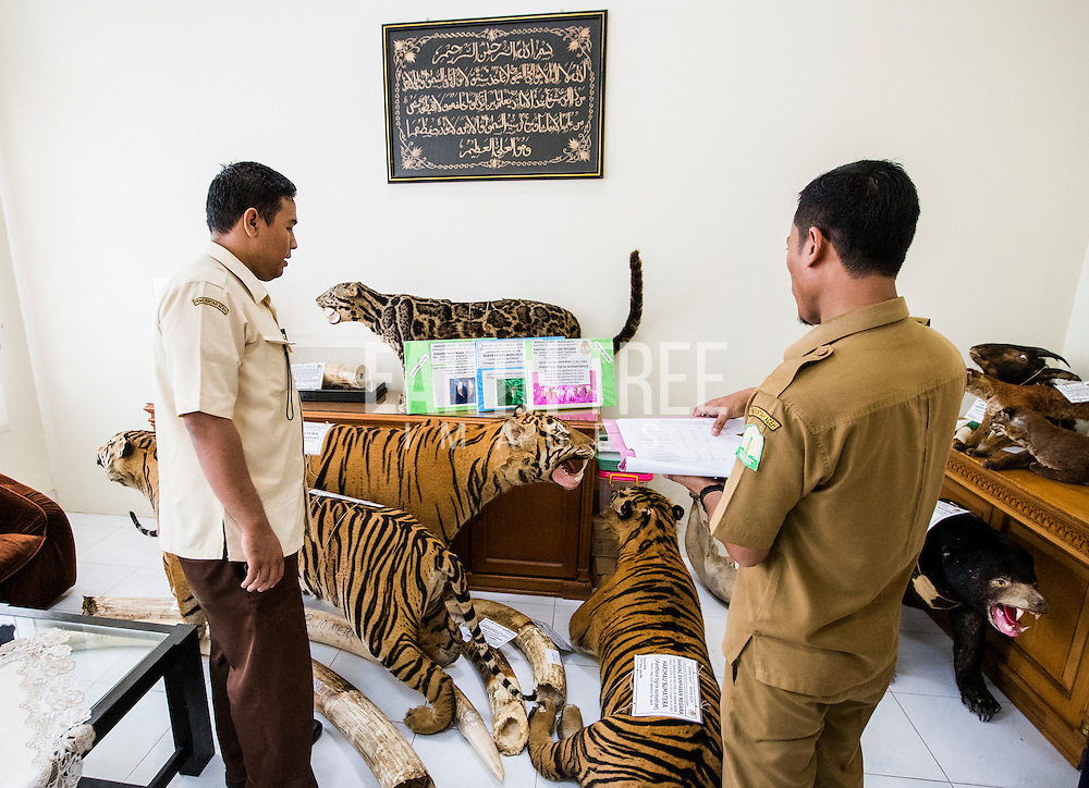Registration of tiger taxidermies and other wildlife contraband at a police station in Banda Aceh, Sumatra Indonesia before they are burnt after several busts of wildlife crime syndicates that had been operating in and around the Leuser Ecosystem, the last place on earth where tigers, rhinos, elephants, and orangutans still coexist under the same canopy. The syndicates have trade routes, spanning the globe and as illegal palm oil expansion moves into the last remaining blocks of forest allowing poachers easy access to some of the last iconic species. Photo: Paul Hilton