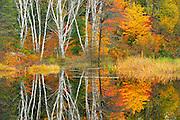 Autumn and the Vermilion RIver<br /> Capreol<br /> Ontario<br /> Canada