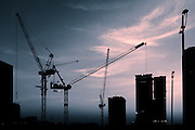 Cranes at Dusk - Doha, Qatar