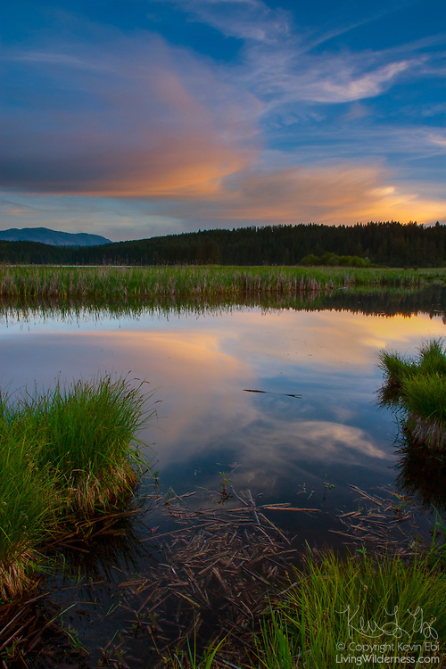 A few wispy clouds catch the golden light of sunset and are reflected on the still waters of a wetland that borders Shepherd Lake near Sagle, Idaho.
