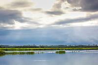 The light shines through stormy clouds over a coastal salt marsh.