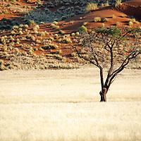 Africa, Namibia, Sossussvlei. The NamibRand.
