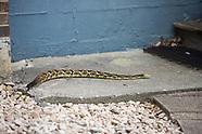 Snakes & Reptiles