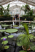 Inside the Waterlilly House at The Royal Botanic Gardens, Kew, usually referred to simply as Kew Gardens, are 121 hectares of gardens  and botanical glasshouses between Richmond and Kew in southwest London, England. It is an internationally important botanical research and education institution with 700 staff, receiving around 2 million visitors per year.