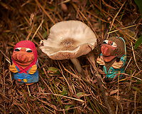 Mushroom Hunting Trolls found a Big One. Image taken with a Leica CL camera and 55-135 mm lens (ISO 100, 135 mm, f/4.5, 1/250 sec).