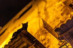 Cat on canopy above street at night, Essaouira, Morocco.