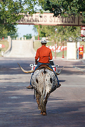 Cowboy riding Texas longhorn  Fort Worth Stockyards National Historic District, Fort Worth, Texas, USA.