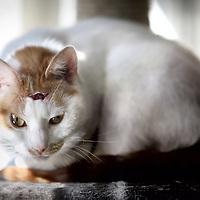 Nederland, Amstelveen , 2 april 2013.<br /> Een enigszins beschadigde kat indierenasiel Amstelveen.<br /> Dierenasiels raken overvol . De dierenarts is door vele mensen niet meer te betalen. Dan moet het dier maar naar het asiel. Ook worden minder dieren opgehaald en ondergebracht bij een nieuw baasje door de financiele crisis.<br /> Foto:Jean-Pierre Jans