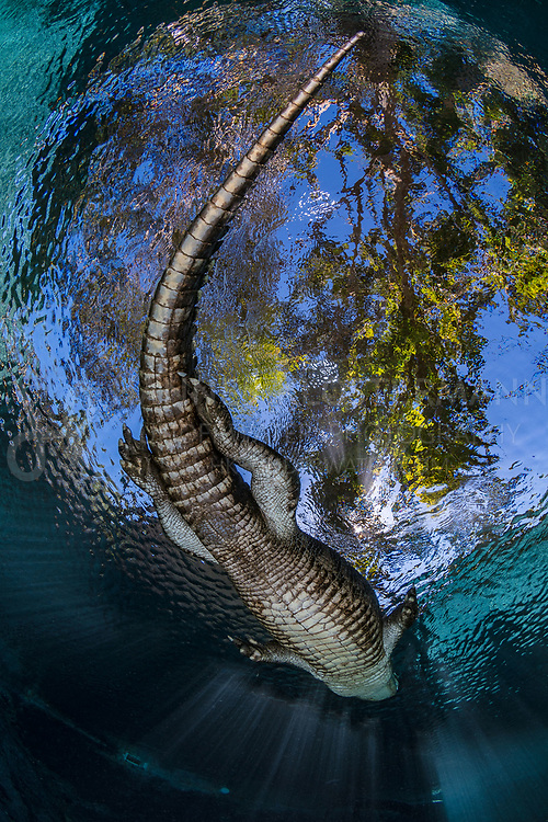 Awarded 2nd place in the wide angle category of Scuba Diving Magazine's Through the Lens competition 2019.