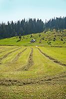 Golzern, Switzerland - rows of cut grass after the harvest.