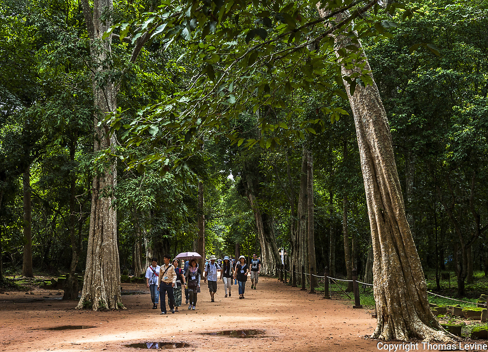 Ta Phrom Entrance with guides and tourists among the large tall trees.  Sept 9, 2015, Editorial