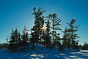 White pine (Pinus strobi) trees on island in Lake of the Woods<br /> Kenora<br /> Ontario<br /> Canada