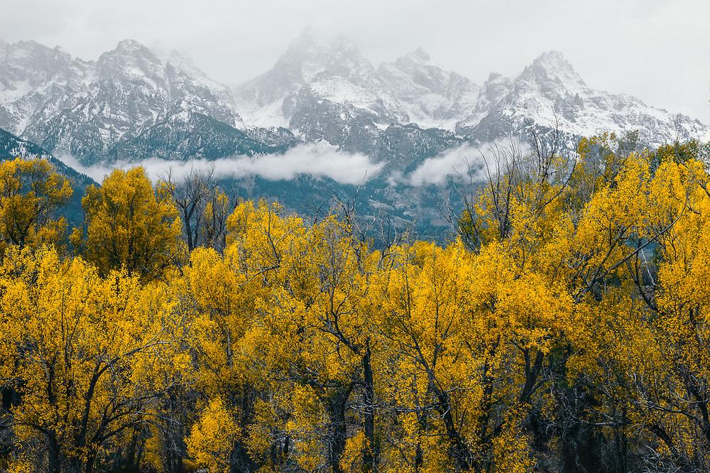 The Teton Range, autumn cottonwood trees, Grand Teton National Park, Wyoming, USA