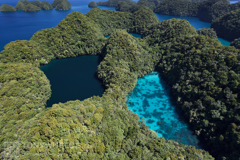 Aerial view of the Rock Islands of Palau, showing the contrasting colors of two adjacent inner lakes.