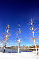 24 February 2008: Three trees at Kings Beach after a late winter storm in Lake Tahoe, Truckee Nevada California border in the Sierra Mountains.