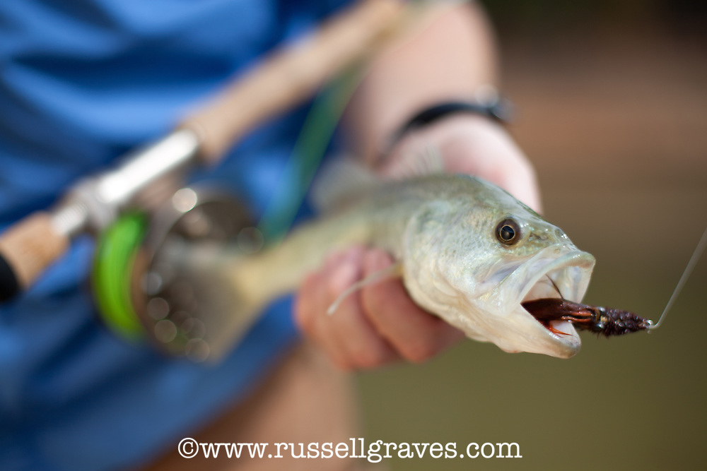 SMALL LARGEMOUTH BASS CAUGHT ON A WOOLY BUGGER FLY