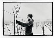 Line Dorsa lors de la taille dans les vignes en janvier 2020<br /> En collaboration avec l'IVV (interprofession de la vigne et du vin en Valais)<br /> Viticulture, vigne, cave, vigneron, vin, agriculture, raisin, Suisse, Valais<br /> Project terre rare, connecté a la terre<br /> #photoargentique #noiretblanc #noiretblancphotographie #blackandwhite #blackandwhitephotography #photoargentique #photographieargentique #leica #leicamp #ilford #labophoto #terrerare #terresrares #terrerareprojet @omaire. <br /> (STUDIO_54/ OLIVIER MAIRE)