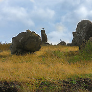 In the southern coast of Easter Island, following the paved road, there is a spectacular ahu called Hanga Te'e located in a place called Vaihu.