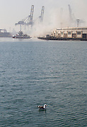 A seagull floats on the water as smoke from a dock fire rises at the Port of Los Angeles on Tuesday, September 23, 2014. The fire that forced evacuations from the wharf continues to smolder but officials say it's under control. Nearly 12 hours after starting, the blaze is sending up huge plumes of smoke that is drifting over Los Angeles Harbor early Tuesday. <br />  (Photo by Ringo Chiu/PHOTOFORMULA.com)