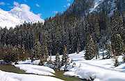 Klosters - Amongst the Silvretta group of the Swiss Alps. Montain stream and conifers.