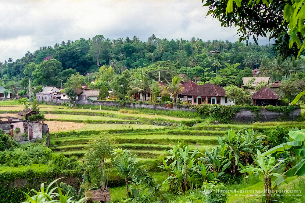 Bali, Karangasem, Tirta Gangga. The small Tirta Gangga village is situated among fertile ricefields.