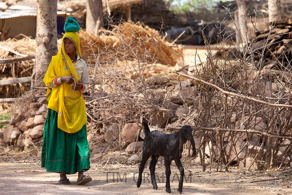 Indian woman with goat at farm smallholding at Kutalpura Village in Rajasthan, Northern India