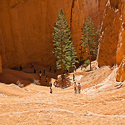 From Sunset Point overlook, a view of the climb down into Bryce Canyon through a series of switchbacks leading to the Navajo Loop and Queen's Garden hiking trails. Bryce Canyon National Park in Southern Utah is distinctive due to geological structures called hoodoos, formed by wind, water and ice erosion of the river and lake bed sedimentary rocks. The red, orange and white colors of the rocks provide spectacular vistas for park visitors.