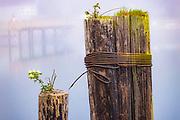 Pylons in La Conner, Washington