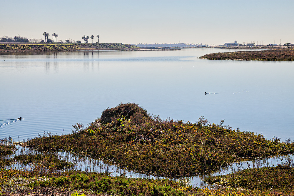 Bolsa Chica Ecological Reserve, Huntington Beach, Orange County, California, USA