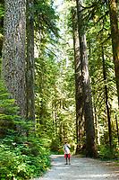Opal Creek Wilderness, Oregon.
