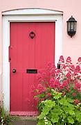 Red valerian flowering plant, centranthus ruber, cottage garden front door, Suffolk, England