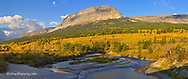 Panoramic of autumn colors in aspens trees on the St Mary River with Singleshot Mountain in Glacier National Park, Montana, USA