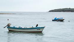 THEMENBILD - ein Vogel auf einem Motorboot, aufgenommen am 28. Juni 2018 in Fazana, Kroatien // a bird on a motorboat, Fazana, Croatia on 2018/06/28. EXPA Pictures © 2018, PhotoCredit: EXPA/ JFK