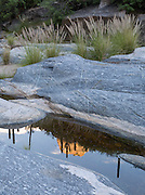 Granite, grasses, and saguaro reflections in Bear Canyon, Tucson